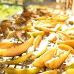 suszarnia owoców